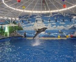 Дельфинарий в парке им. 1 Мая открылся