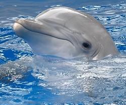 Дельфинарий для реабилитации детей-инвалидов появится в Нижегородской области